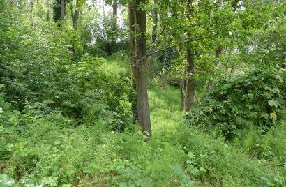 Riqualificazione e rimboschimento forestale