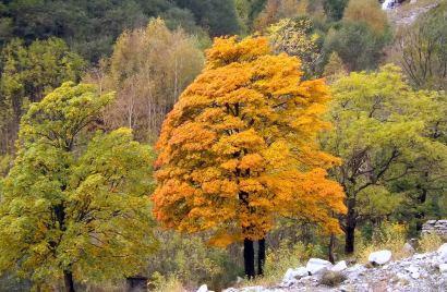 Gestione delle risorse forestali