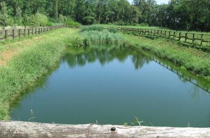 Phytodepuration and lagooning